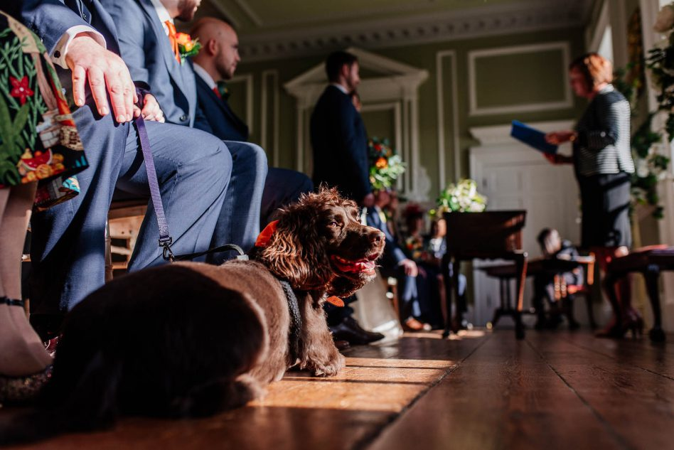 Dog at a wedding ceremony at Cusworth Hall